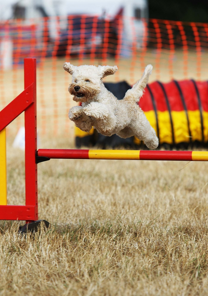 Valley Farm Agility Show 2018 (21st/22nd July)