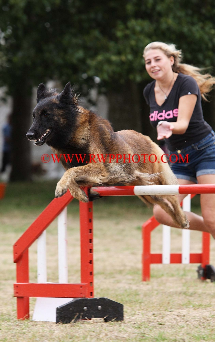 Dogs In Need Agility Society Show, Suffolk - 2018