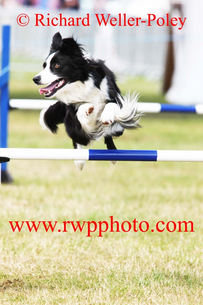 Dogs in Need Agility Society Show, Suffolk - 2019